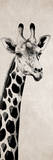Giraffe I Poster by Vivien Rhyan