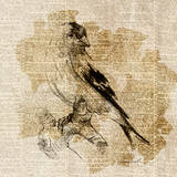 Bird Study III Prints by Lanie Loreth