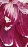 Arti Tulip II Art by Yvonne Poelstra-Holzaus