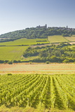 Vineyards Near to the Hilltop Village of Vezelay in the Yonne Area of Burgundy, France, Europe Photographic Print by Julian Elliott