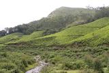 Landscape, Munnar, Kerala, India, Asia Fotografie-Druck von Balan Madhavan
