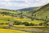 Summer Buttercups in Upper Swaledale Near Thwaite Photographic Print by Mark Sunderland