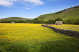Field Barns and Buttercup Meadows at Muker Photographic Print by Mark Sunderland