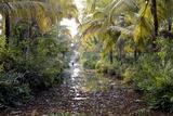 Backwaters, Vaikom, Kerala, India, Asia Photographic Print by Balan Madhavan