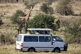 Tourists Watching Masai Giraffe (Giraffa Camelopardalis Tippelskirchi) Photographic Print by Angelo Cavalli
