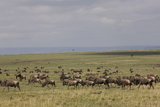 Herd of Wildebeests (Connochaetes Taurinus) Photographic Print by Angelo Cavalli