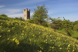 Broadway Tower with Cowslips, Broadway, Worcestershire, England, United Kingdom, Europe Photographic Print by Stuart Black