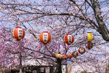 Cherry Blossom in the Maruyama-Koen Park, UNESCO World Heritage Sight Kyoto, Japan Photographic Print by Michael Runkel