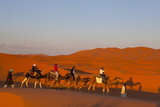 Tourists on Camel Safari, Sahara Desert, Merzouga, Morocco, North Africa, Africa Fotografisk tryk af Doug Pearson