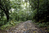 Path in Shola Forest, Eravikulam National Park, Kerala, India, Asia Photographic Print by Balan Madhavan