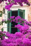 Shuttered Window and Blossom Fotografie-Druck von Frank Fell