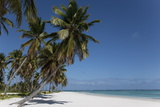 Punta Cana, Dominican Republic, West Indies, Caribbean, Central America Photographic Print by Angelo Cavalli