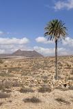 Volcano Caldera De Gairia, Tuineje, Fuerteventura, Canary Islands, Spain, Europe Fotografie-Druck von Markus Lange