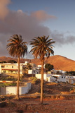 Palm Trees and the White Village of Toto at Sunset, Fuerteventura, Canary Islands, Spain, Europe Photographic Print by Markus Lange