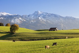 Prealps Landscape with a Cottage and Cows Photographic Print by Markus Lange