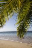 Las Terrenas, Samana Peninsula, Dominican Republic, West Indies, Caribbean, Central America Photographic Print by Angelo Cavalli