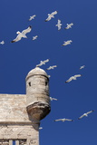 Seagulls Flying Above Turret of the Old Fort Photographic Print by Stuart Black