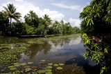 Backwaters of Kumarakom, Kottayam, Kerala, India, Asia Photographic Print by Balan Madhavan