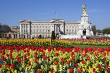 Buckingham Palace and Queen Victoria Monument with Tulips, London, England, United Kingdom, Europe Photographic Print by Stuart Black