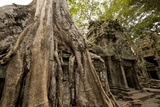 Temple of Ta Prohm, Angkor, UNESCO World Heritage Site Photographic Print by Ben Pipe