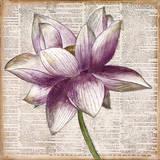 Defined Lotus I Kunstdruck von Patricia Quintero-Pinto