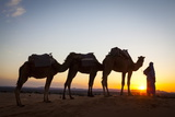 Camel Driver, Sahara Desert, Merzouga, Morocco, North Africa, Africa Photographic Print by Doug Pearson