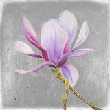 Magnolia on Silver Leaf II Posters by Patricia Quintero-Pinto