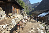 Mule Train Between Phakding and Namche, Everest Base Camp Trek, Solukhumbu, Nepal, Himalayas, Asia Photographic Print by Peter Barritt