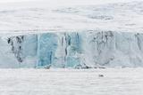 Adult Polar Bear (Ursus Maritimus) Near Glacier Face in Storfjord Photographic Print by Michael Nolan