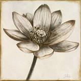 Sepia Lotus II Print by Patricia Quintero-Pinto