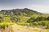 The Vineyards of Sancerre in the Loire Valley, Cher, Centre, France, Europe Photographic Print by Julian Elliott