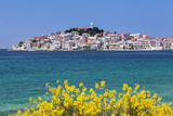 Primosten, Dalmatian Coast, Croatia, Europe Photographic Print by Markus Lange