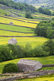 Field Barns in Buttercup Meadows Near Thwaite in Swaledale Photographic Print by Mark Sunderland