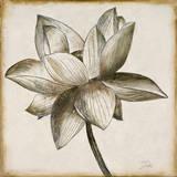 Sepia Lotus I Prints by Patricia Quintero-Pinto