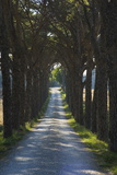 Avenue of Trees, Chiusi, Umbria, Italy, Europe Photographic Print by Charles Bowman