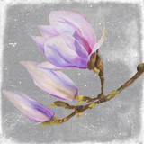 Magnolia on Silver Leaf I Prints by Patricia Pinto