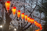 Red Lanterns Illuminating the Cherry Blossom in the Ueno Park, Tokyo, Japan, Asia Photographie par Michael Runkel