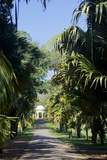 Royal Botanical Gardens, Peradeniya, Kandy, Sri Lanka, Asia Photographic Print by Simon Montgomery