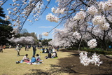Picnic in the Cherry Blossom in the Shinjuku-Gyoen Park, Tokyo, Japan, Asia Stampa fotografica di Michael Runkel
