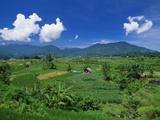 Rice Terrace, Minangkabau, Sumatra, Indonesia Photographic Print by Robert Francis