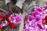 Mullik Ghat Flower Market, Kolkata (Calcutta), West Bengal, India, Asia Photographic Print by Bruno Morandi
