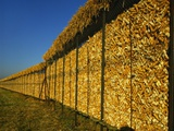 Corn in a Storage, Loire Valley, France Photographic Print by Michael Busselle