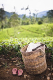 Tea Pluckers Basket and Shoes at a Tea Plantation Photographic Print by Matthew Williams-Ellis