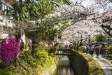 Cherry Blossom in the Philosopher's Walk, Kyoto, Japan, Asia Photographic Print by Michael Runkel