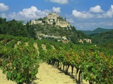 Vineyard, Entrechaux, Vaucluse, France Photographic Print by Duncan Maxwell