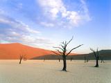 Dead Trees and Orange Sand Dunes Fotografisk tryk af Gavin Hellier
