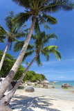 Palm Trees and Lamai Beach, Koh Samui, Thailand, Southeast Asia, Asia Photographic Print by Lee Frost