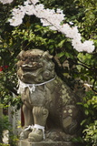 A Mythical Lion Statue and Cherry Blossom in a Temple in Kyoto, Honshu Island, Japan, Asia Photographic Print by Christian Kober