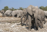 Elephants (Loxodonta Africana), Etosha National Park, Namibia, Africa Photographic Print by Ann and Steve Toon