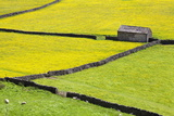 Barn and Dry Stone Walls in Buttercup Meadows at Gunnerside Photographic Print by Mark Sunderland